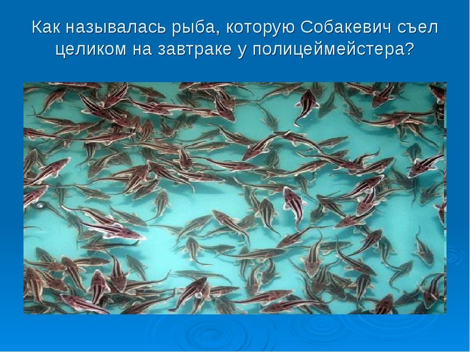 Как называлась рыба, которую Собакевич съел целиком на завтраке у полицеймейс...
