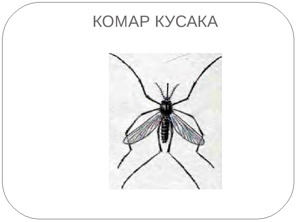КОМАР КУСАКА