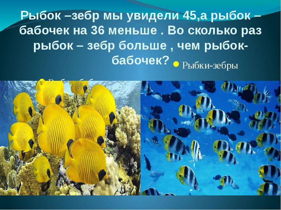 Рыбок –зебр мы увидели 45,а рыбок –бабочек на 36 меньше . Во сколько раз рыбо...