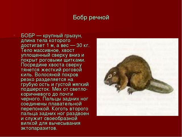 Бобр речной БОБР — крупный грызун, длина тела которого достигает 1 м, а вес —...