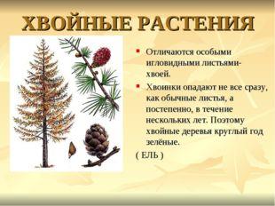 ХВОЙНЫЕ РАСТЕНИЯ Отличаются особыми игловидными листьями- хвоей. Хвоинки опад