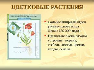 ЦВЕТКОВЫЕ РАСТЕНИЯ Самый обширный отдел растительного мира. Около 250 000 вид