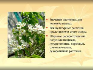 Значение цветковых для человека велико. Все культурные растения- представител