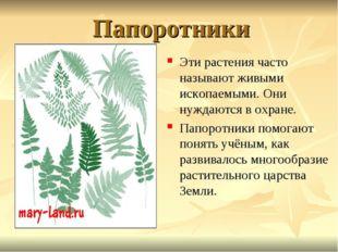 Папоротники Эти растения часто называют живыми ископаемыми. Они нуждаются в о