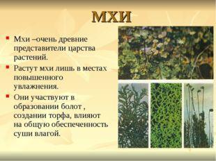 МХИ Мхи –очень древние представители царства растений. Растут мхи лишь в мест
