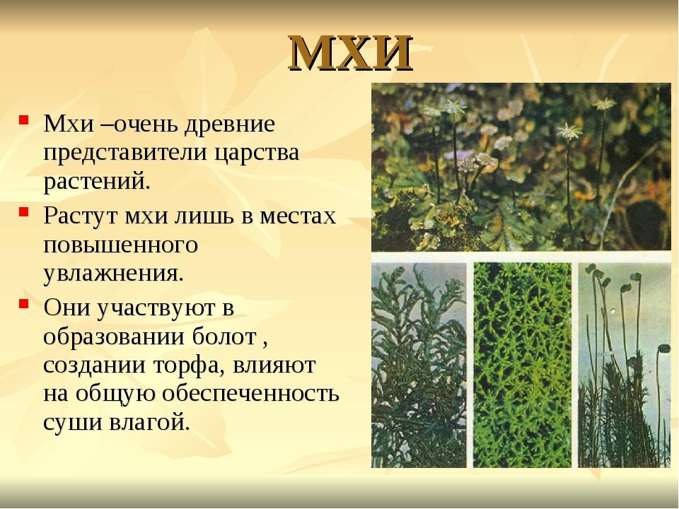 МХИ Мхи –очень древние представители царства растений. Растут мхи лишь в мест...