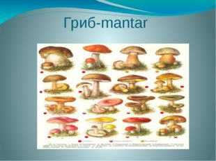Гриб-mantar