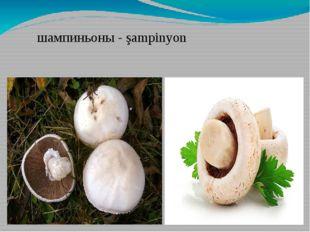 шампиньоны - şampinyon