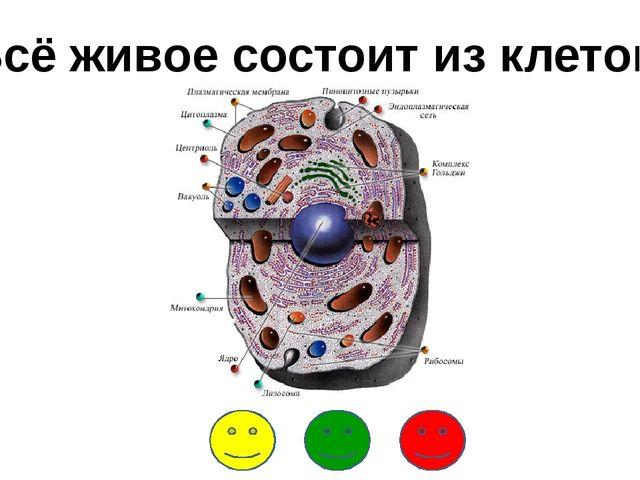 Всё живое состоит из клеток