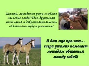 Кстати, лошадиные ушки «любят» ласковые слова! Твоя дружеская интонация и доб