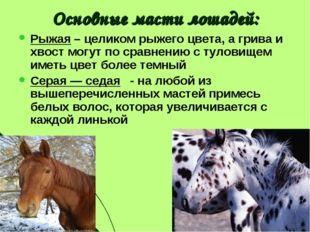 Основные масти лошадей: Рыжая – целиком рыжего цвета, а грива и хвост могут п