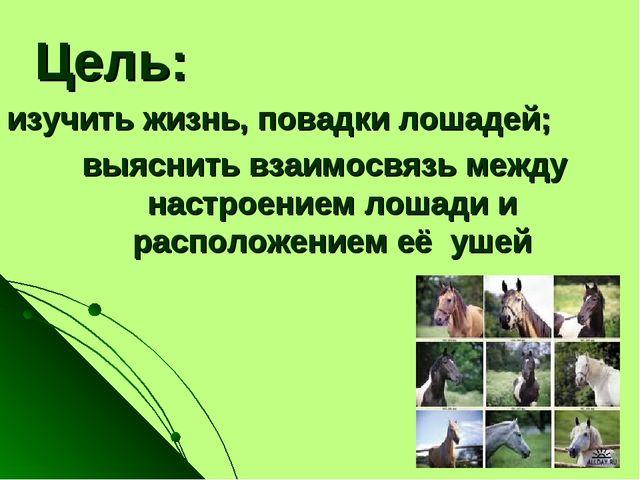 Цель: изучить жизнь, повадки лошадей; выяснить взаимосвязь между настроением...