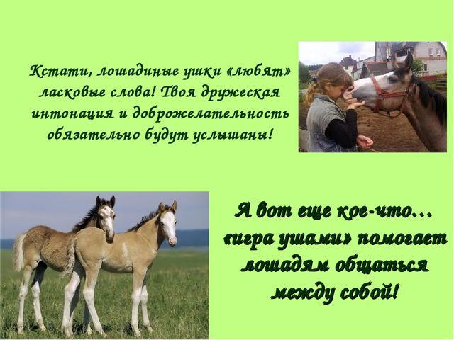 Кстати, лошадиные ушки «любят» ласковые слова! Твоя дружеская интонация и доб...
