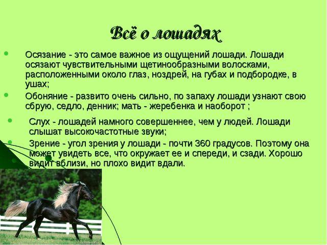 Всё о лошадях Осязание - это самое важное из ощущений лошади. Лошади осязают...