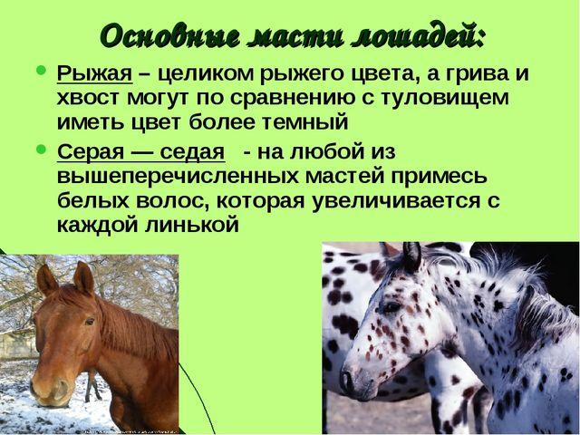 Основные масти лошадей: Рыжая – целиком рыжего цвета, а грива и хвост могут п...