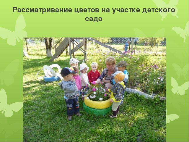 Рассматривание цветов на участке детского сада