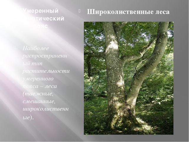 Умеренный климатический пояс Наиболее распространенный тип растительности уме...