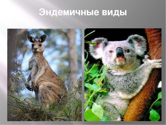 Эндемичные виды
