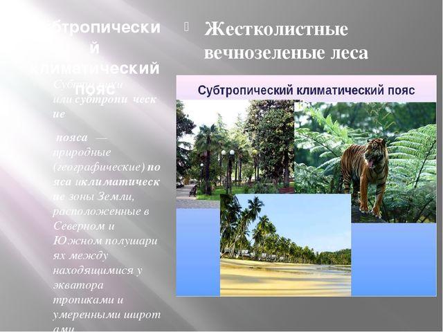 Субтропический климатический пояс Субтро́пики илисубтропи́ческие пояса́— п...