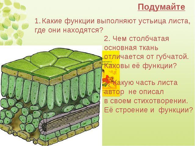 Подумайте Какие функции выполняют устьица листа, где они находятся? 2. Чем ст...