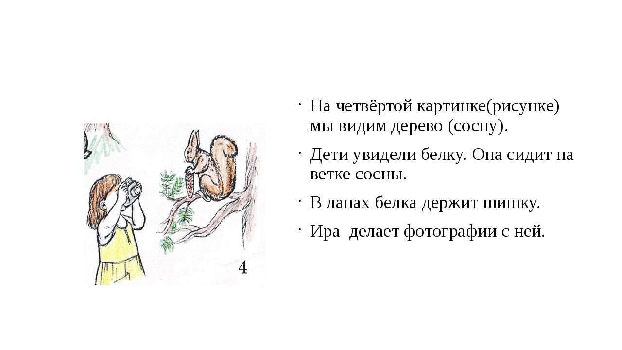 На четвёртой картинке(рисунке) мы видим дерево (сосну). Дети увидели белку....