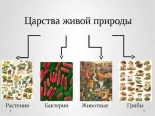 Царства живой природы Бактерии Грибы Животные Растения