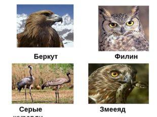 Беркут Филин Серые журавли Змееяд