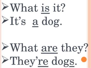 What is it? It's a dog. What are they? They're dogs.