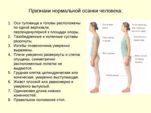 Признаки нормальной осанки человека: Оси туловища и головы расположены по одн