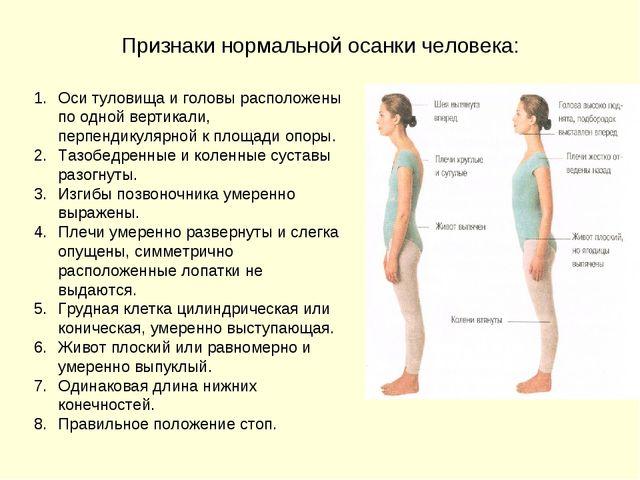 Признаки нормальной осанки человека: Оси туловища и головы расположены по одн...