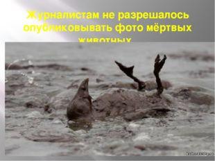 Журналистам не разрешалось опубликовывать фото мёртвых животных .