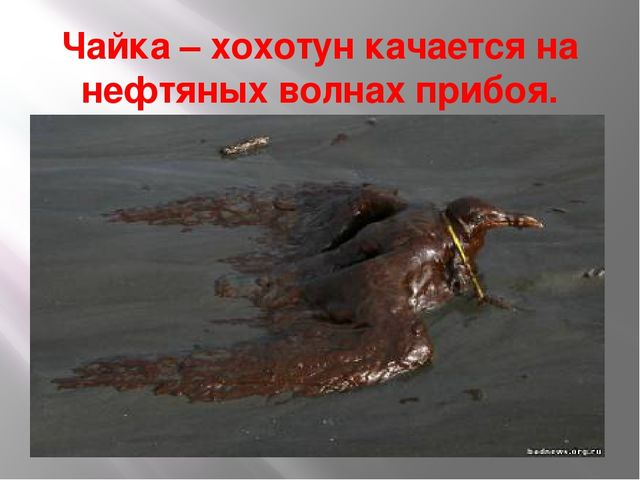 Чайка – хохотун качается на нефтяных волнах прибоя.