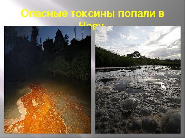 Опасные токсины попали в Неву.
