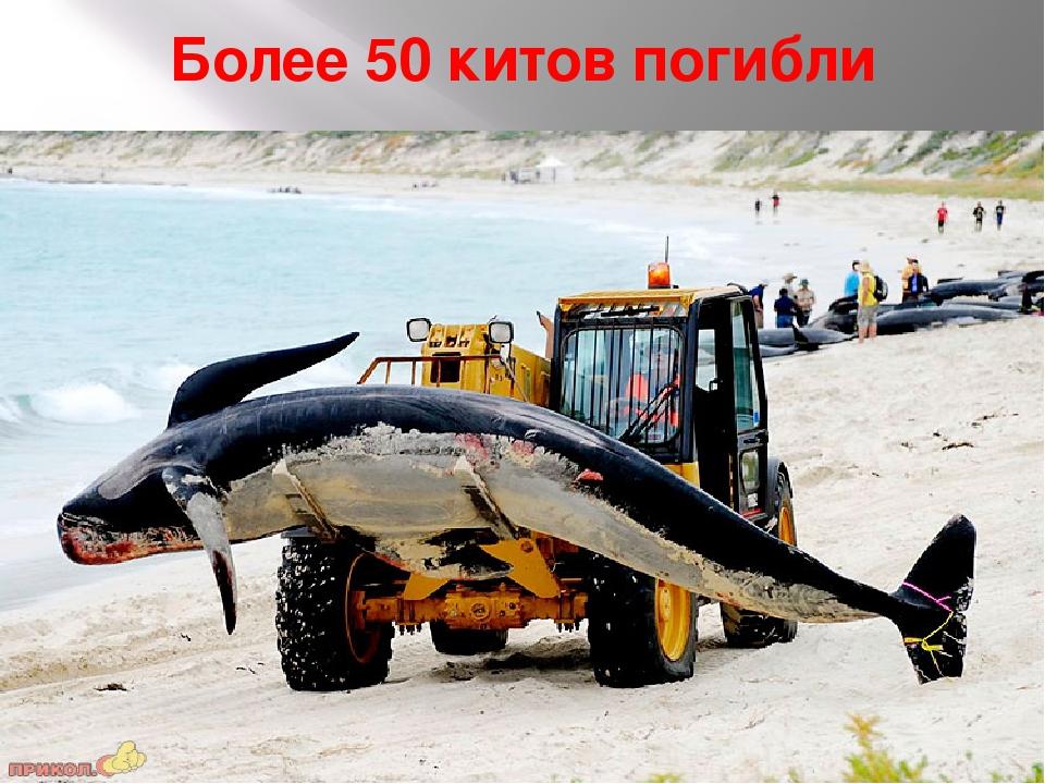 Более 50 китов погибли