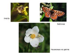 пчела бабочка Насекомые на цветке