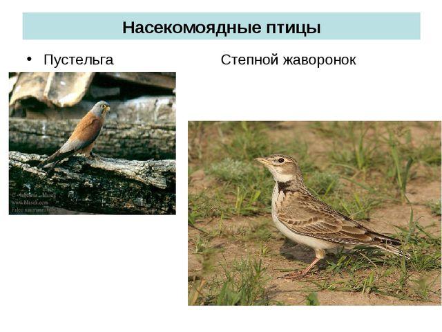 Насекомоядные птицы Пустельга Степной жаворонок