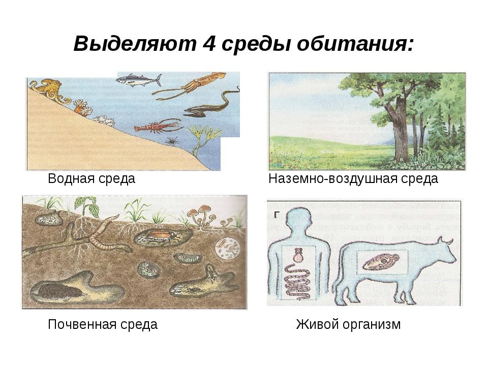 Выделяют 4 среды обитания: Водная среда Наземно-воздушная среда Почвенная сре...