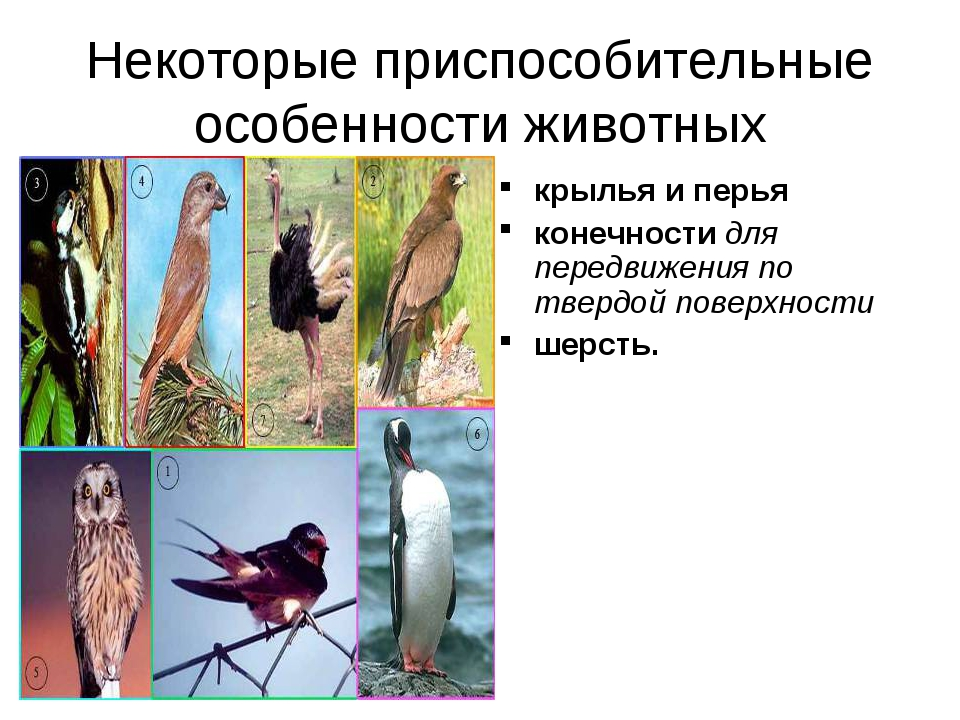 Некоторые приспособительные особенности животных крылья и перья конечности дл...