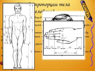 Каковы пропорции тела человека? Пупок делит высоту человека в золотом отношен