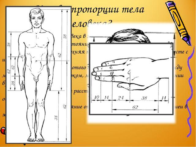 Каковы пропорции тела человека? Пупок делит высоту человека в золотом отношен...