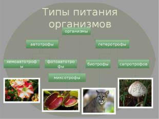 Типы питания организмов организмы автотрофы гетеротрофы хемоавтотрофы фотоавт