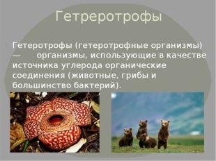 Гетреротрофы Гетеротрофы (гетеротрофные организмы) — организмы, использующие