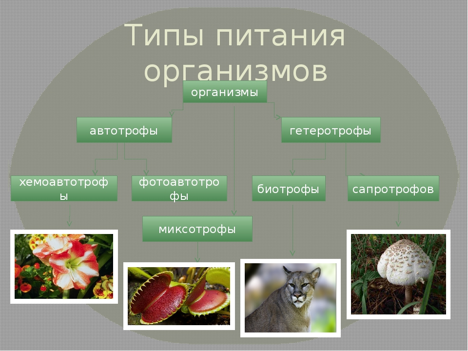 Типы питания организмов организмы автотрофы гетеротрофы хемоавтотрофы фотоавт...