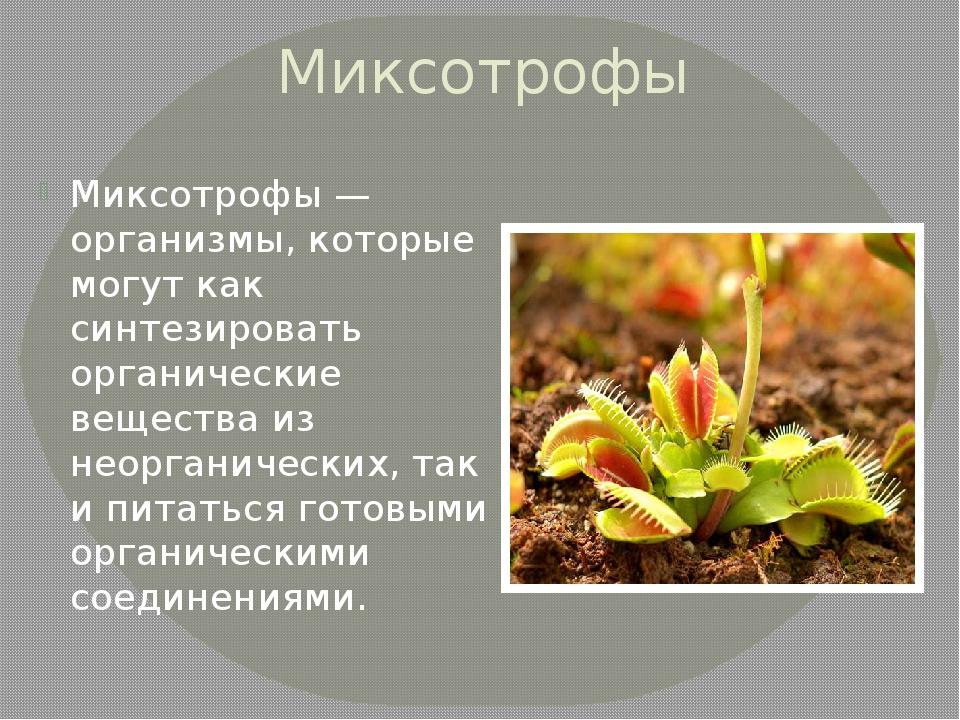 Миксотрофы Миксотрофы — организмы, которые могут как синтезировать органическ...