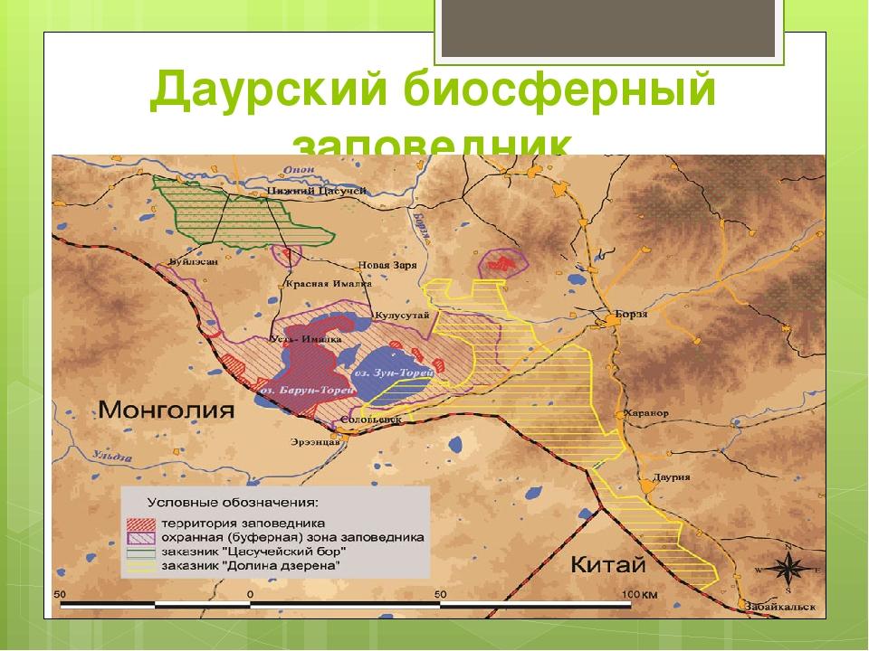 Даурский биосферный заповедник