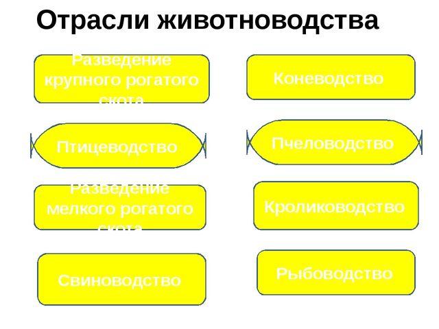Отрасли животноводства Разведение крупного рогатого скота Коневодство Птицево...