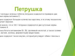 Петрушка В 100 г молодых зеленых побегов петрушки содержится примерно две сут