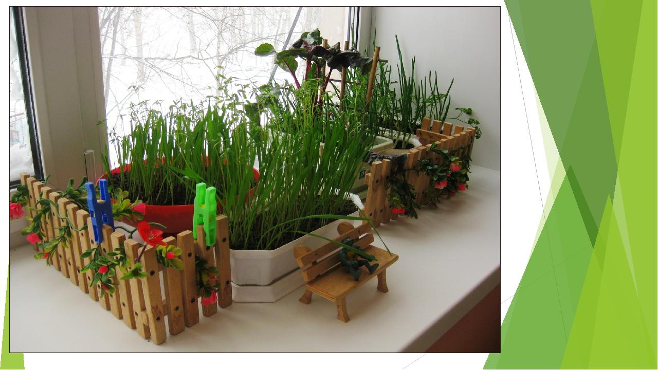 Огород в детском саду на подоконнике своими руками