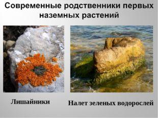 Лишайники Налет зеленых водорослей