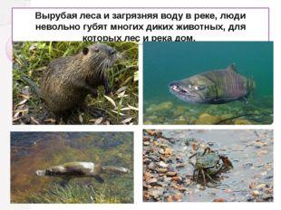 Вырубая леса и загрязняя воду в реке, люди невольно губят многих диких животн